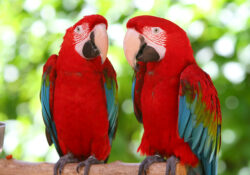 2 papugi- co to znaczy świetny film reklamowy?